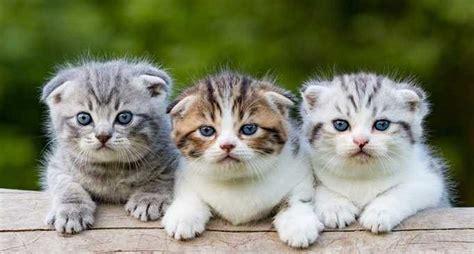 foto anak kucing lucu  imut imut kucingcoid