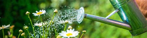 Pflanzen Automatisch Gießen by Pflanzen Giessen Was Ist Zu Beachten Saemereien Ch