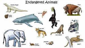 Animals That Are Endangered List - Bing images