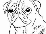 Pug Coloring Pages Puppy Birijus Colouring Chinese sketch template