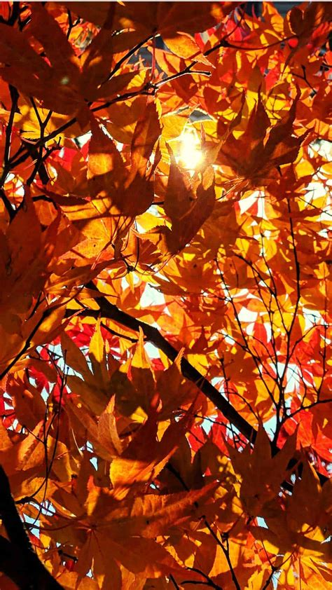 Here you can find the best autumn screen wallpapers uploaded by our community. Free Autumn Wallpaper and Fall Backgrounds for Your Phone!