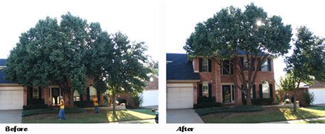 tree commercial  residential tree service