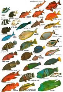 les poissons lessons tes teach