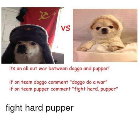 Pupper Memes - vs its an all out war between doggo and pupper if on team doggo comment doggo do a war if on