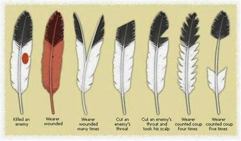 white wolf eagle feathers   sacred meaning