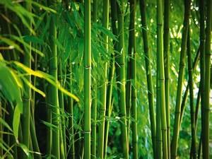Keilrahmen Kaufen Baumarkt : artland poster leinwandbild pflanzen botanik gr ser bambus foto online kaufen otto ~ Orissabook.com Haus und Dekorationen