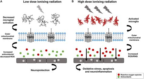 Role Of Ionizing Radiation In