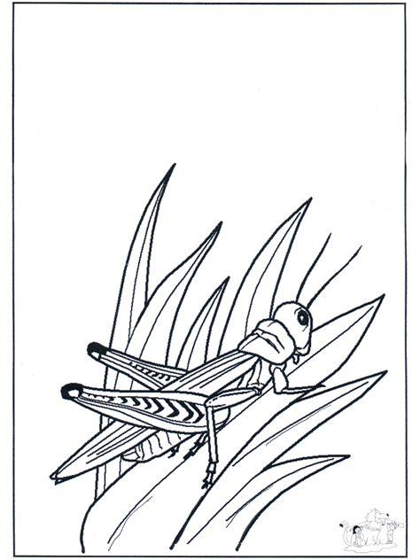 sprinkhaan kleurplaat insecten