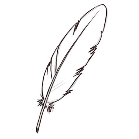 draw  feather drawing comment dessiner des plumes