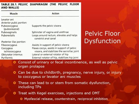 Pelvic Floor Dysfunction by Omt For Common Gynecologic Disorders Ppt
