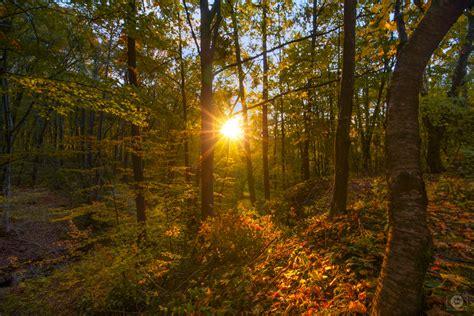 autumn trees  sun background high quality
