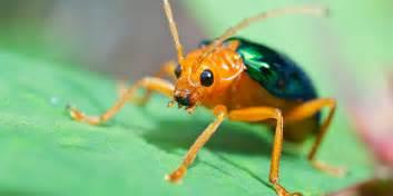 invertebrates national wildlife federation