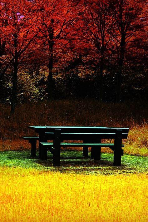paesaggio tavolo  sedie nel bosco autunno natura