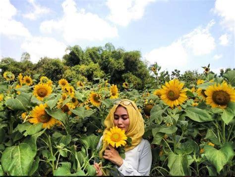 tujuh taman bunga tercantik  indonesia warung wisata
