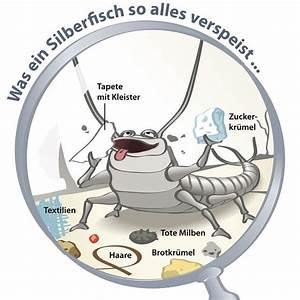 Was Tun Gegen Schimmel Im Schlafzimmer : silberfische im schlafzimmer innenarchitektur mittel ~ Michelbontemps.com Haus und Dekorationen