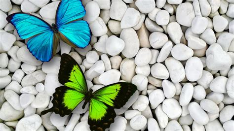 Background Home Screen Butterfly Wallpaper by 1366x768 Blue Green Butterfly Desktop Pc And Mac Wallpaper