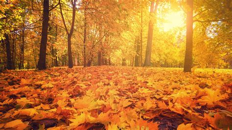 Autumn equinox: When does autumn begin? - CBBC Newsround