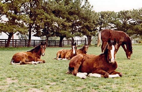 horses probiotics equimed which