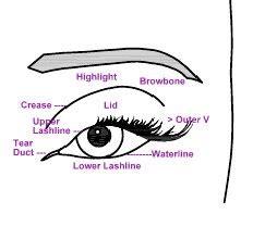 Diagram For Eye Makeup by Make Up Jungle Eye Chart Diagram