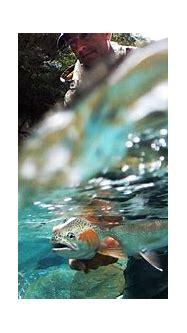 Fly Fishing Wallpaper ·① WallpaperTag