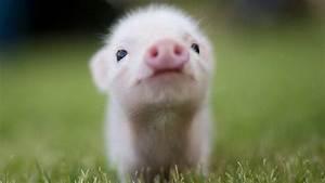 Cutest animals in HD