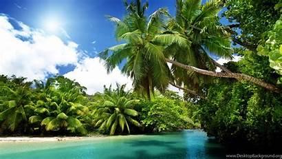Uhd Definition Ultra Beach Wallpapers Desktop Palm