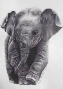 Realistic Baby Elephant Drawing