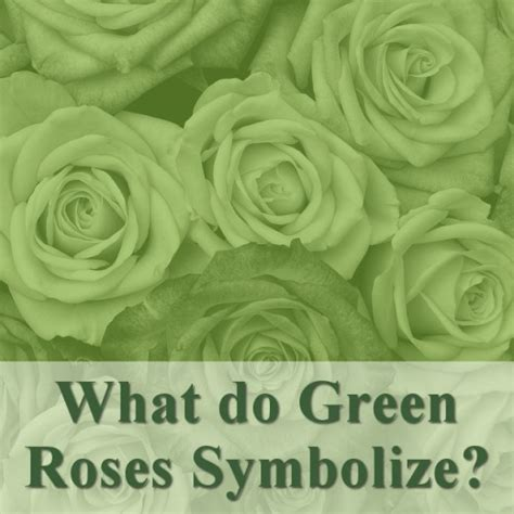 what does the green light mean in the great gatsby all the different colors of roses and their meanings