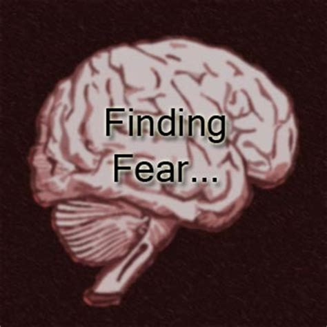 neuroscientists   located  fear  processed