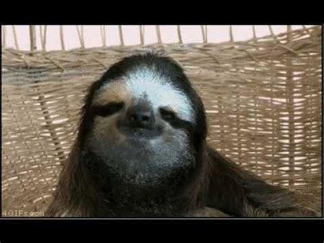 dramatic sloth youtube
