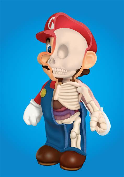 anatomy   plumber dsaur design