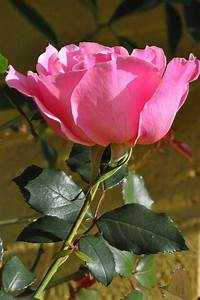 The 20 Most Beautiful Flowers In The World - Best ...