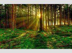 Landscape Trends for 2017 Forest Bathing Elemental