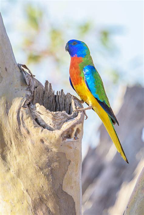 australian wildlife auswildlife