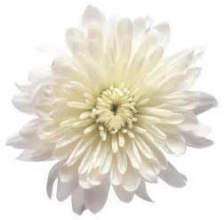 White Transparent Flower Clip Art