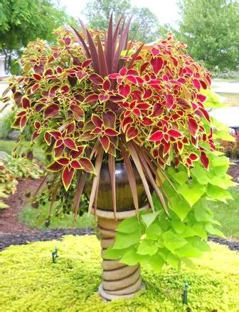 Container Gardening With Coleus  Source  Colorado State