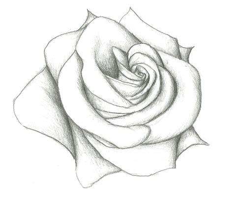 easy pencil drawing  rose  model easy pencil drawings