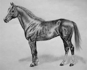 horse pencil drawing.... by ichfindedich on DeviantArt