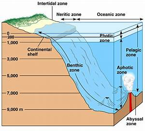 Biodiversity  Marine Ecosystems Or Aquatic Diversity Basics