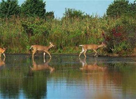 Mammals Wild Animal Best Blog Famous Wild Animals In India