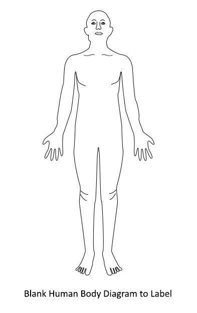 human body diagram unlabeled human body anatomy