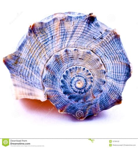 Blue Seashell Stock Photo Image Of Beauty, Curve, Shadow