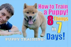 how to train your puppy 8 things in 7 days stop puppy With how to properly train a dog