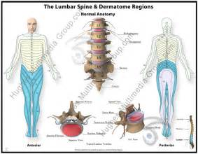 Lumbar Dermatome Chart
