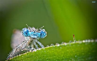 Dragonfly Insects Macro Droplets Wallpapers Water Plants
