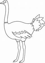 Ostrich Coloring Emu Clip Template Outline Bird Colorable Line Birds Templates Egg Parrot Sweetclipart Flightless Sketch sketch template
