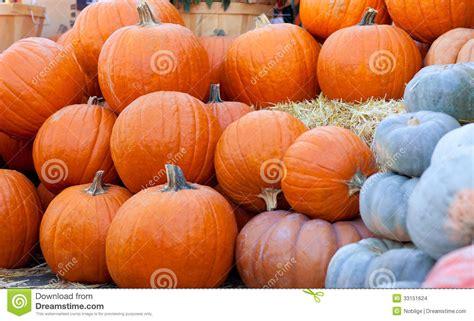 Westfield Main Place Pumpkin Patch by Download Free Software Pumpkin Patch City Of Orange