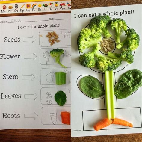 plant activities for kindergarten preschool grade