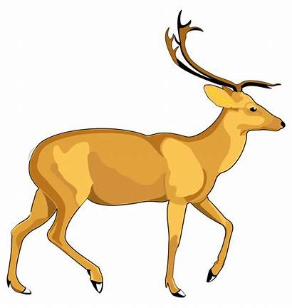 Deer Transparent Purepng Animals