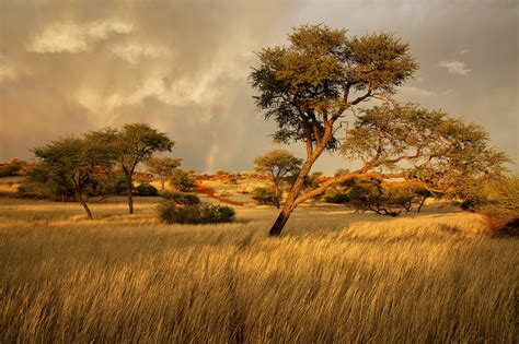 Namibia, Africa, Savanna Wallpaper  Nature And Landscape